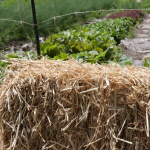 straw and garden