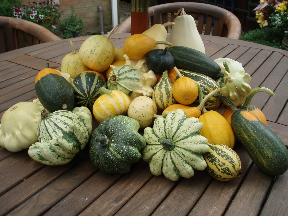 gourds on table