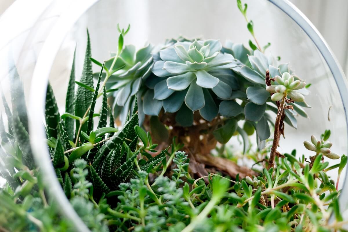 19 Eye Catching Terrarium Plants For Your Miniature Garden Insteading