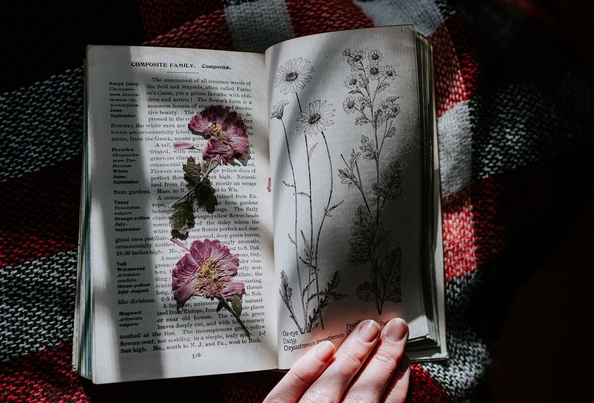 flowers pressed in book