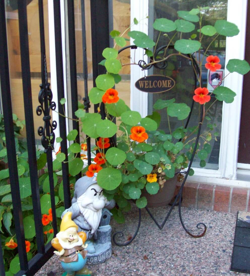 nasturtiums on welcome sign