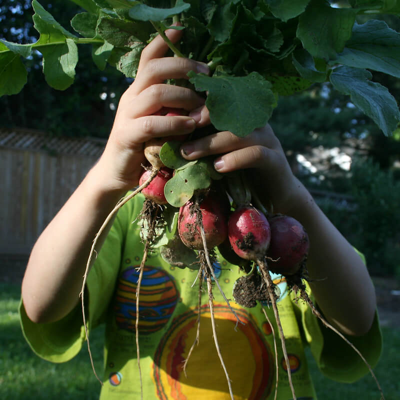 kid holding radishes