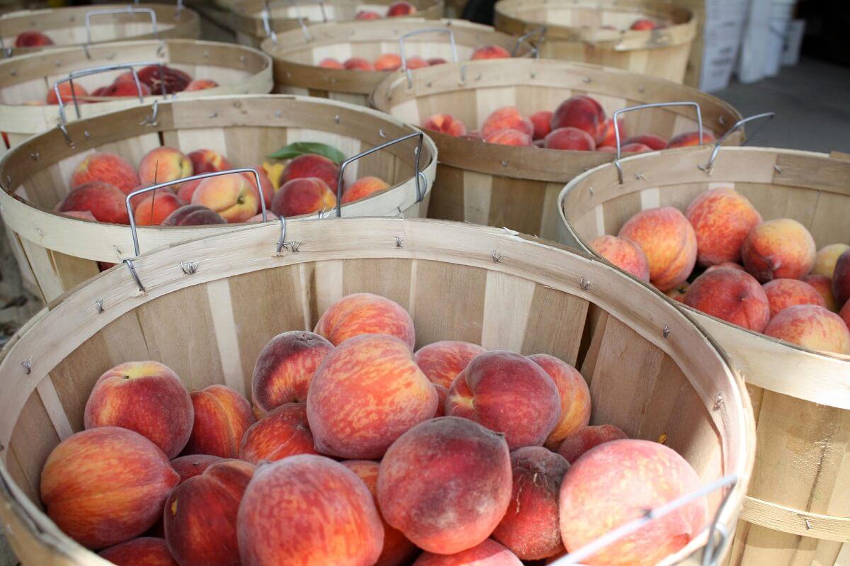 peaches in bins