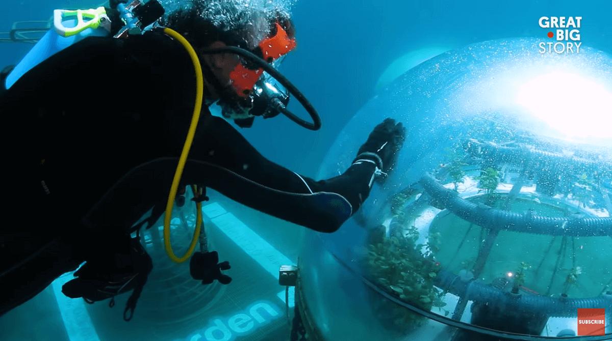 under water herb garden dome