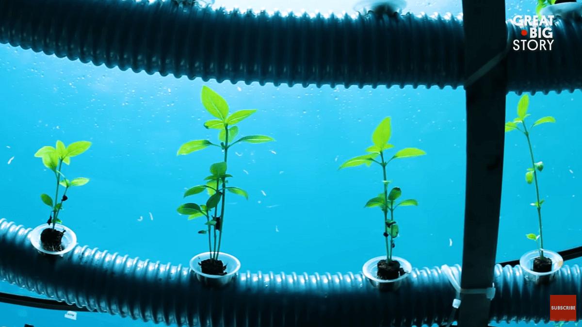 herbs growing underwater