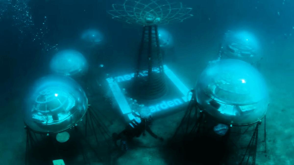 nemo's garden under water