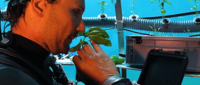 man collecting basil from underwater herb garden