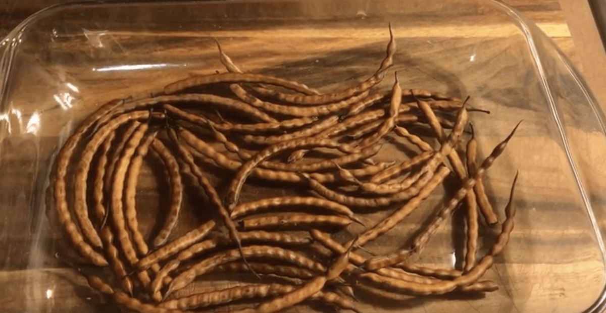 roasted mesquite beans