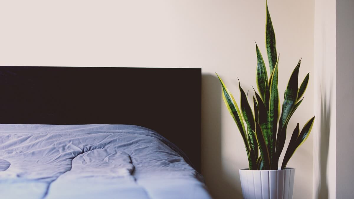 bed linens and snake plant
