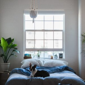 dog on bed by window