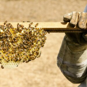 how honey is made