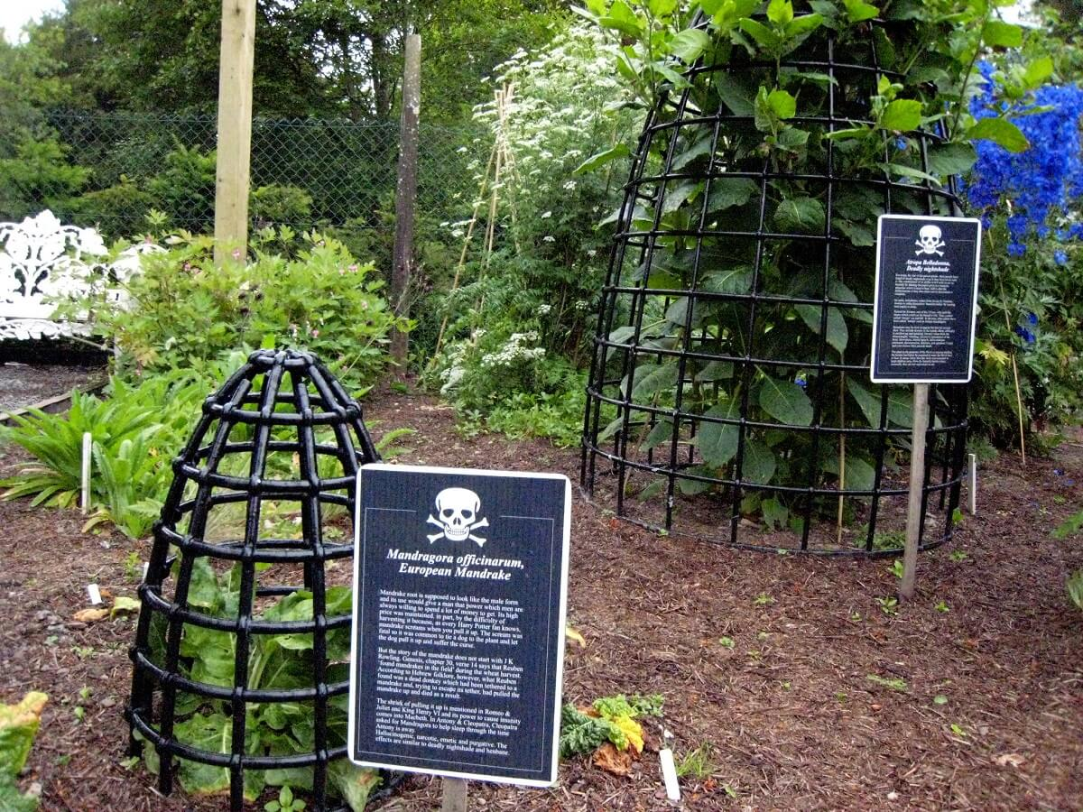 poisonous plants in cages