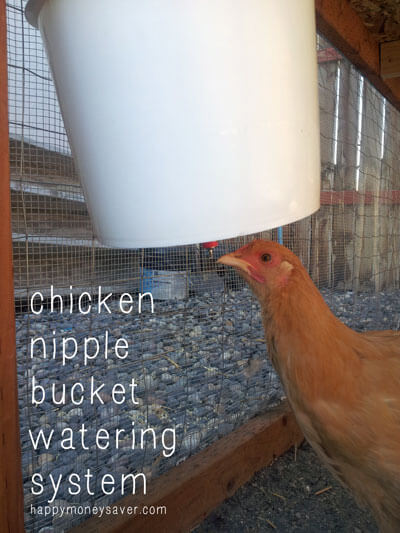 chicken nipple bucket watering system