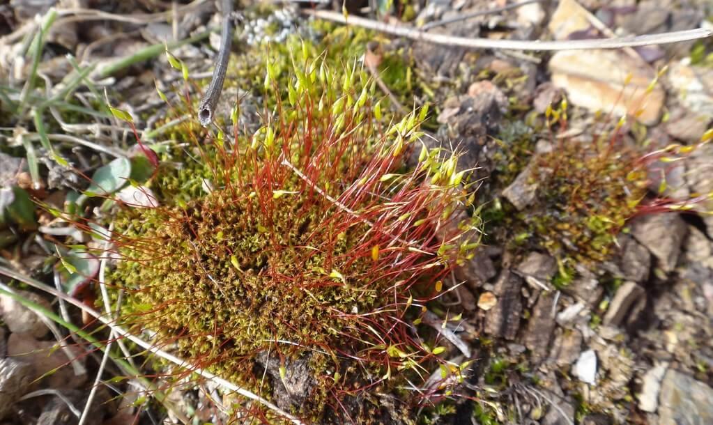 burned ground moss