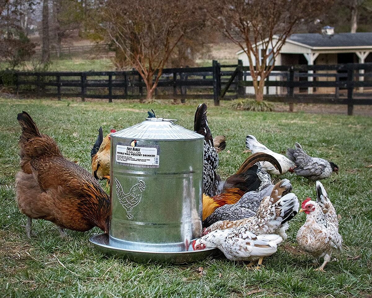 double wall chicken waterer