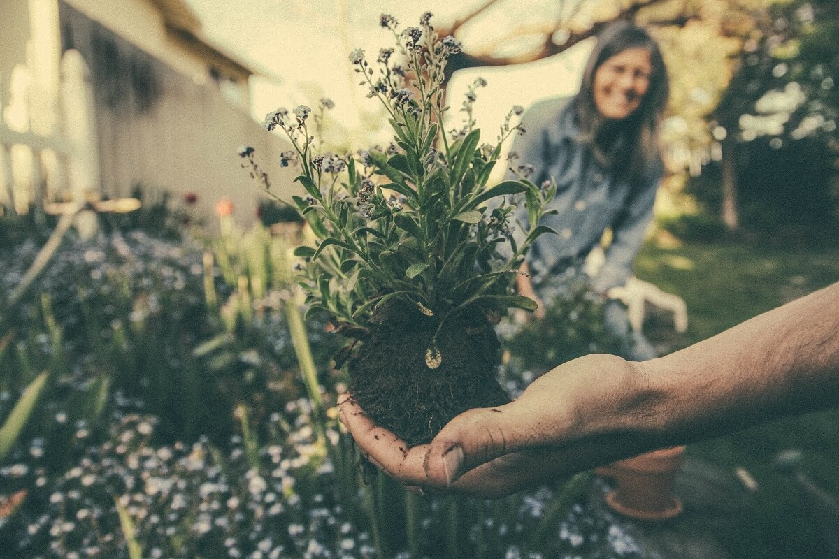 gardening resources for seniors