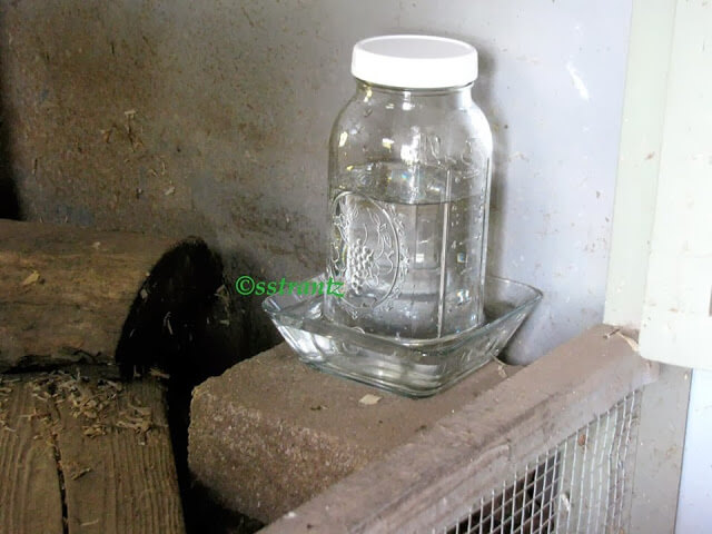 glass chicken waterer