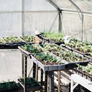 greenhouse plants