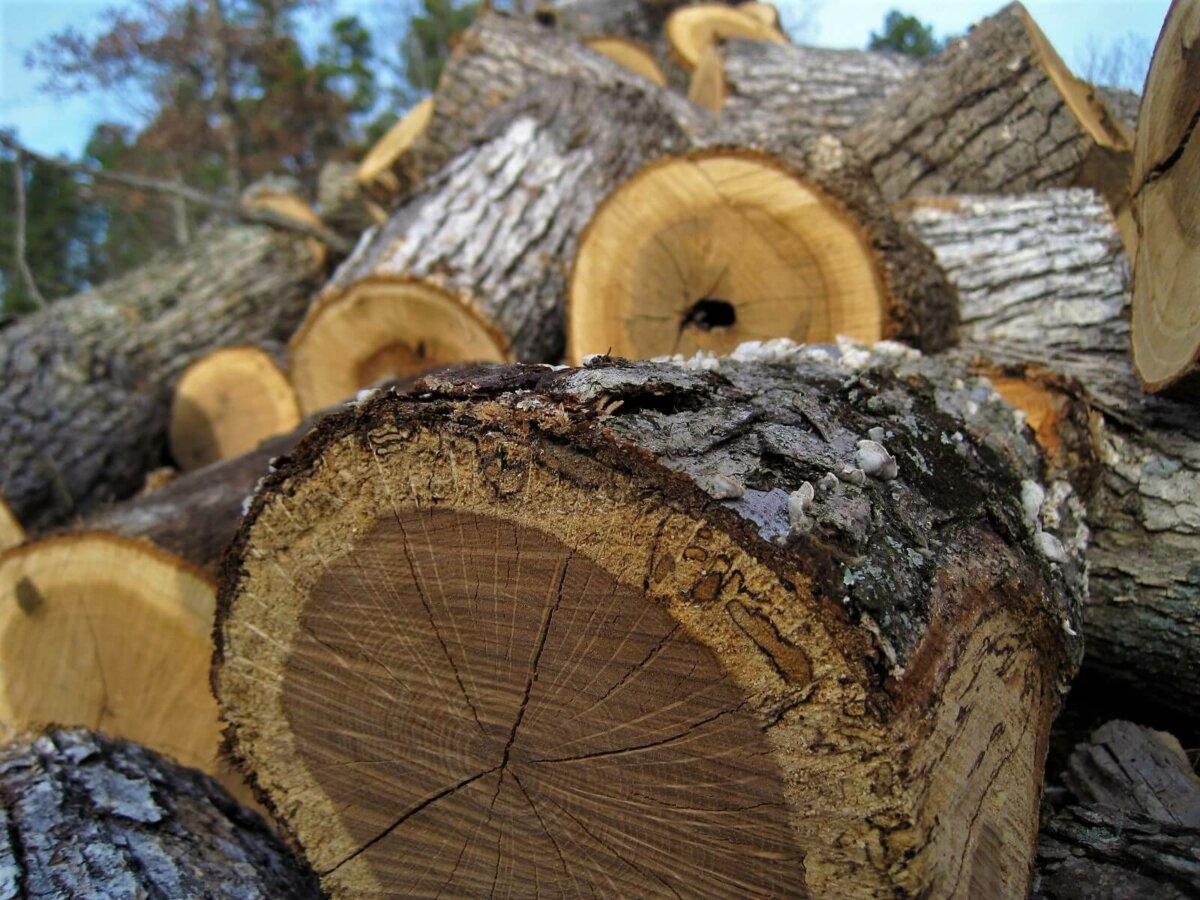 gathered firewood