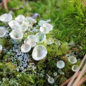types of moss