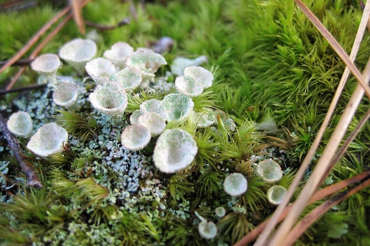 10 Types Of Moss For Your Garden Insteading