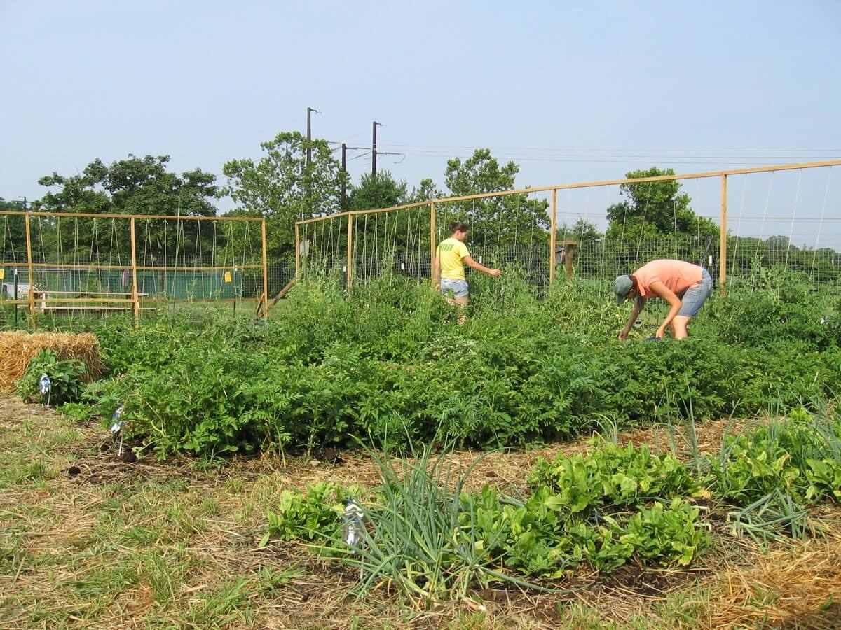 people tending to community garden