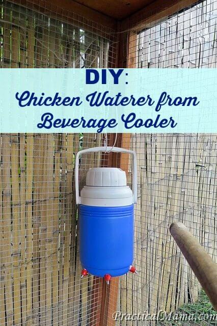 upcycled beverage cooler chicken waterer
