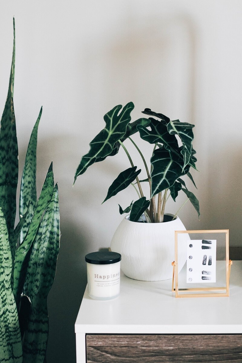 nightstand with plants