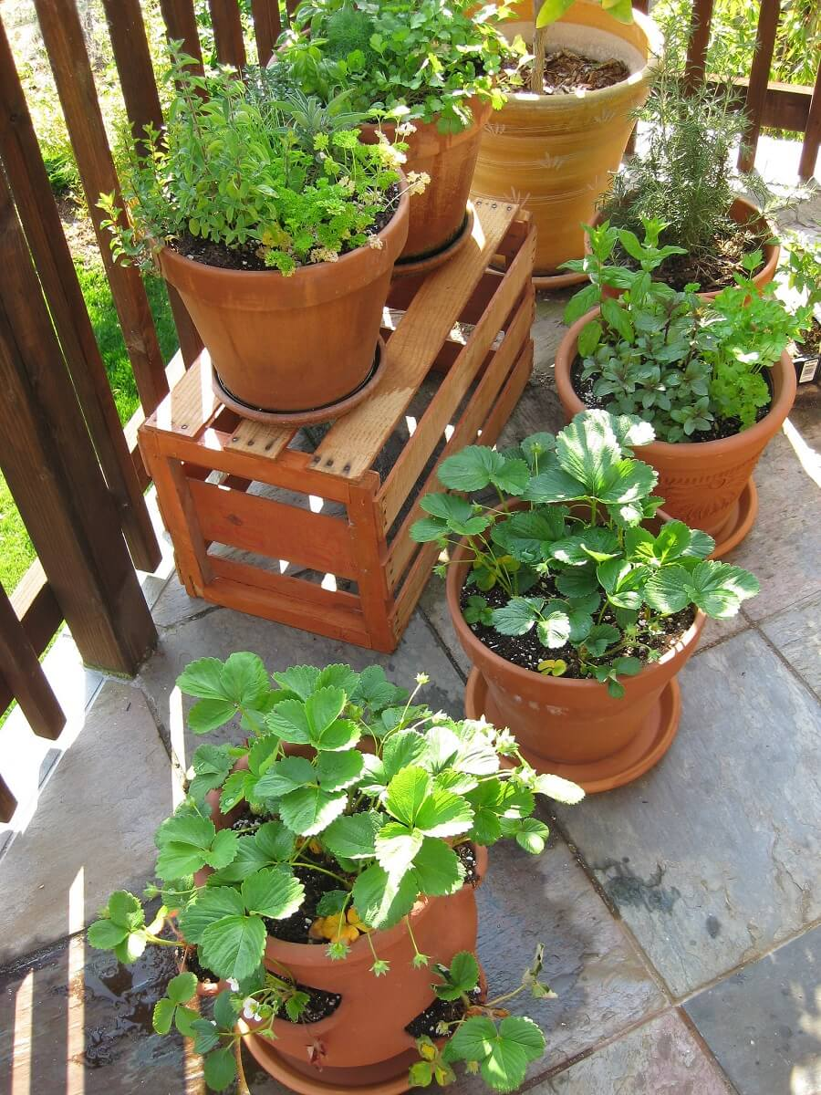 using epsom salts for plants on patio