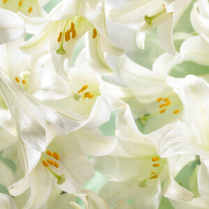 bunch of easter lilies