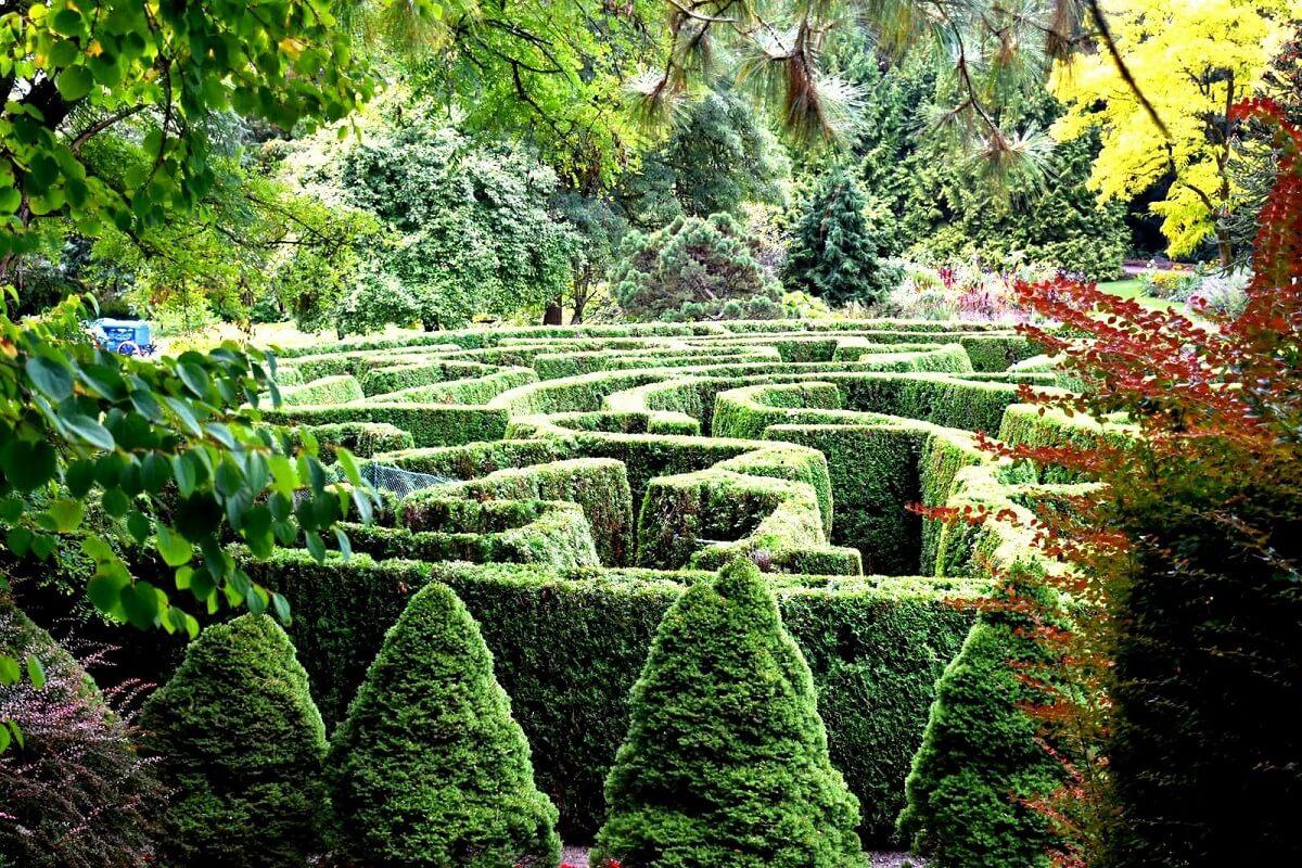garden topiary maze