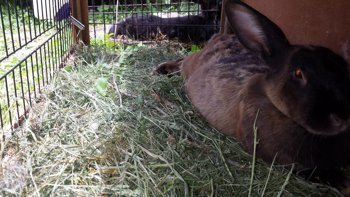uses for grass clippings in rabbit bed