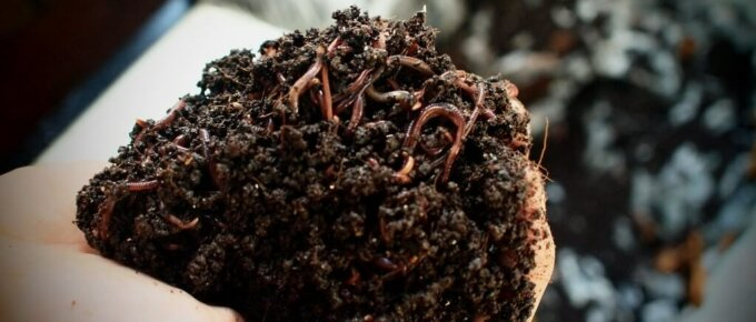 vermiculture worm bin