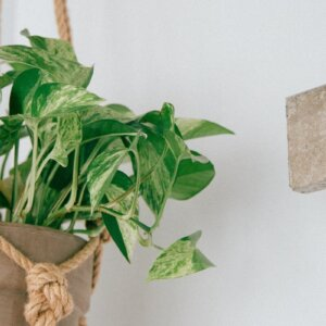 best hanging plants