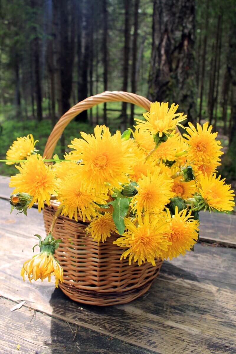 basket of dandelions