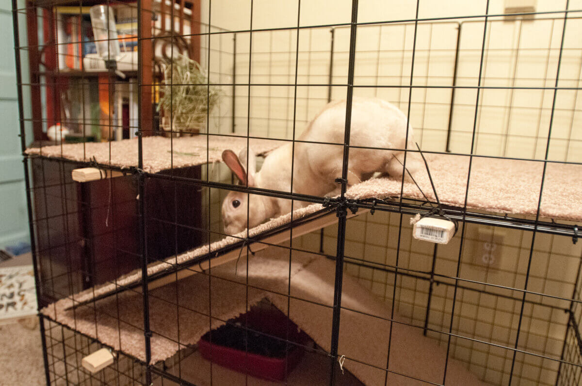 exercise cage for indoor rabbits
