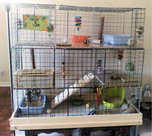 cubicle rabbit cage