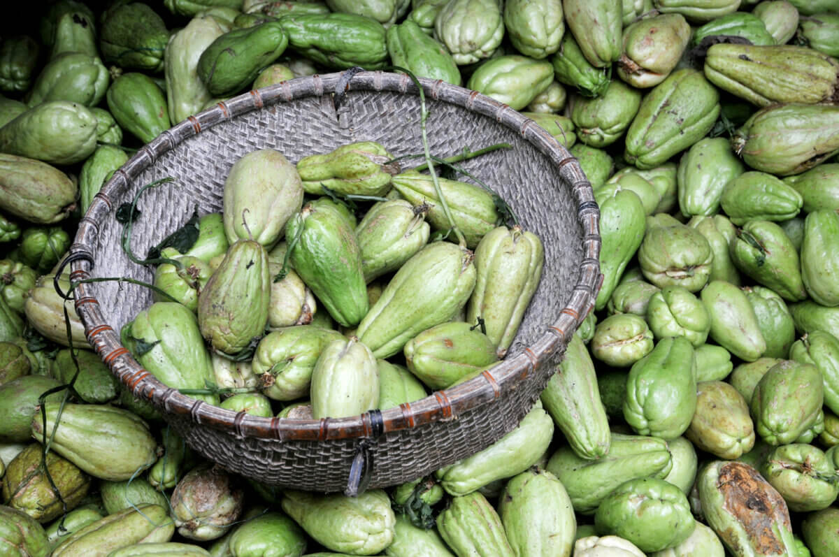 chayote perennial vegetables