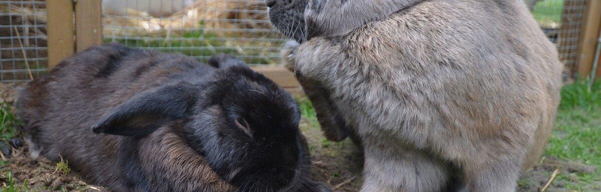 rabbits at rabbit hutch