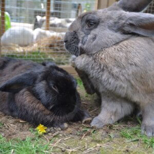 rabbits at rabbit hutch