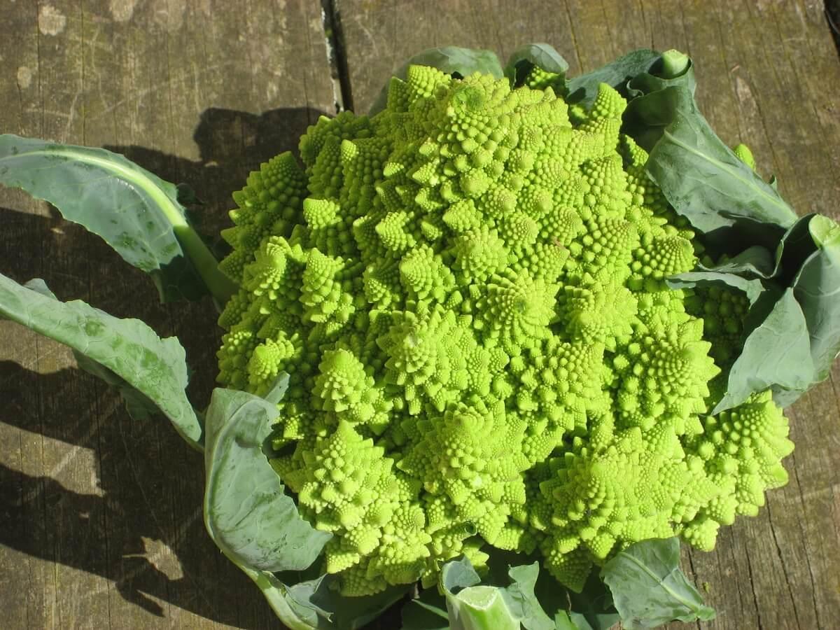 Romanesque broccoli