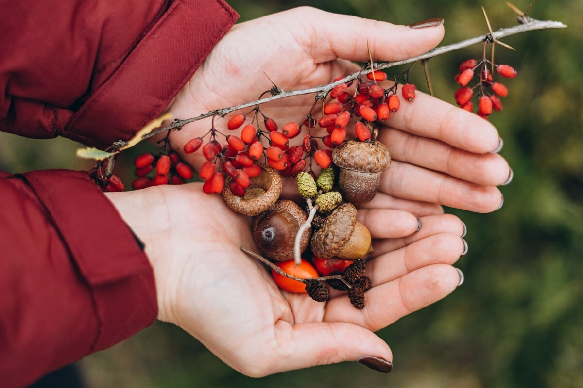 winter foraging