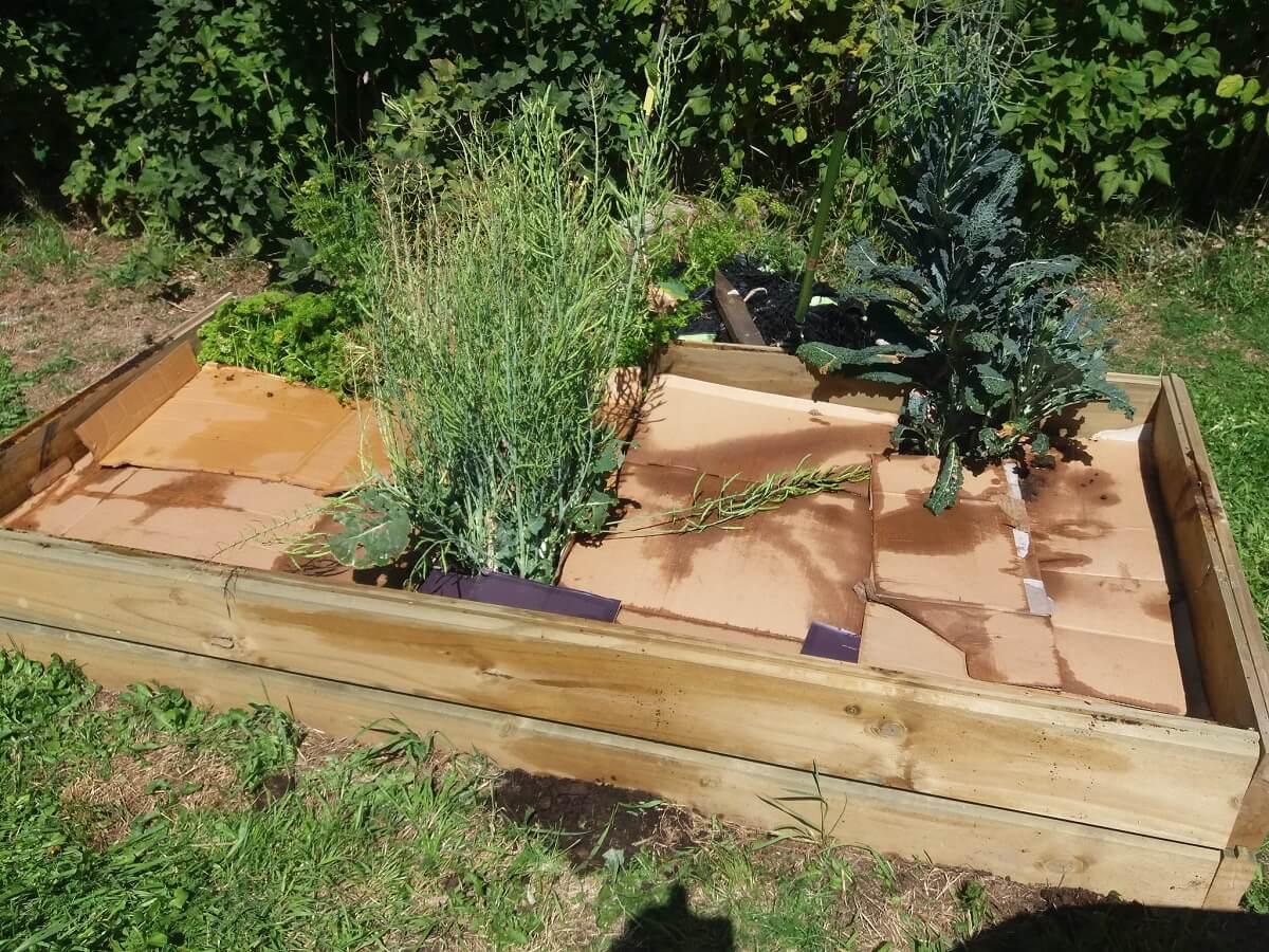 cardboard covering plants