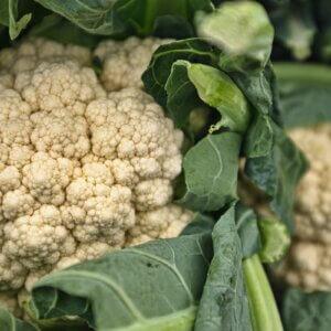 growing cauliflower