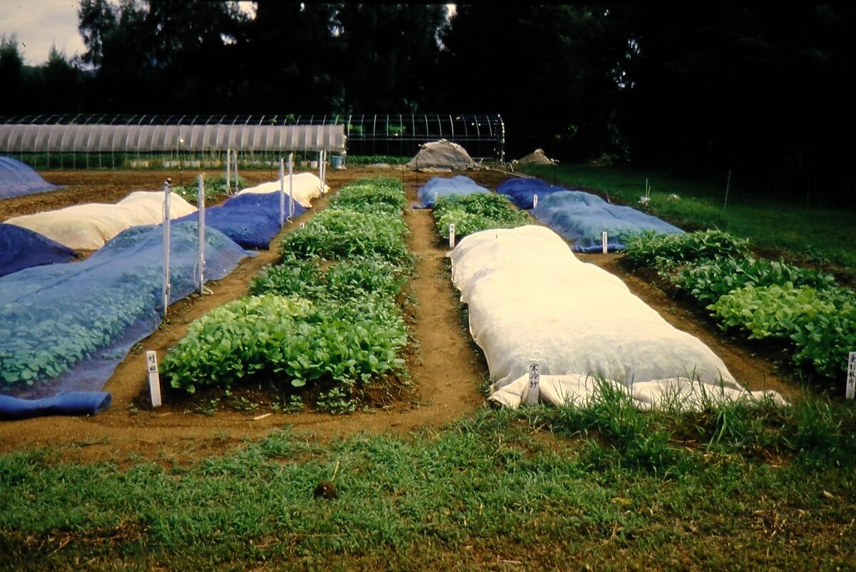 row covers