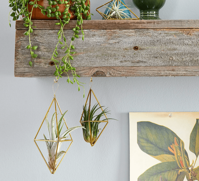 brass-air-plant-holder