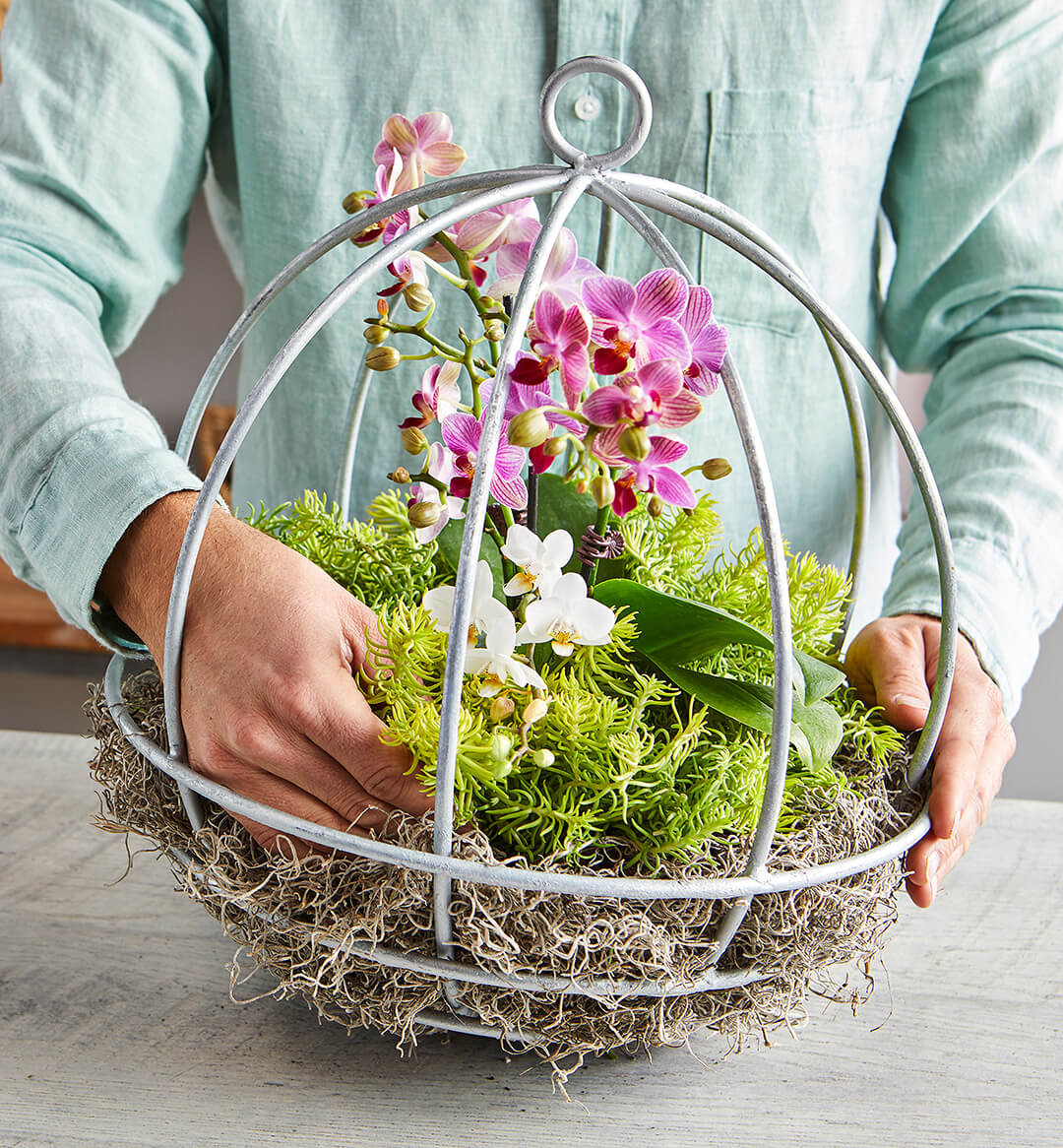 orchid-plant-holder