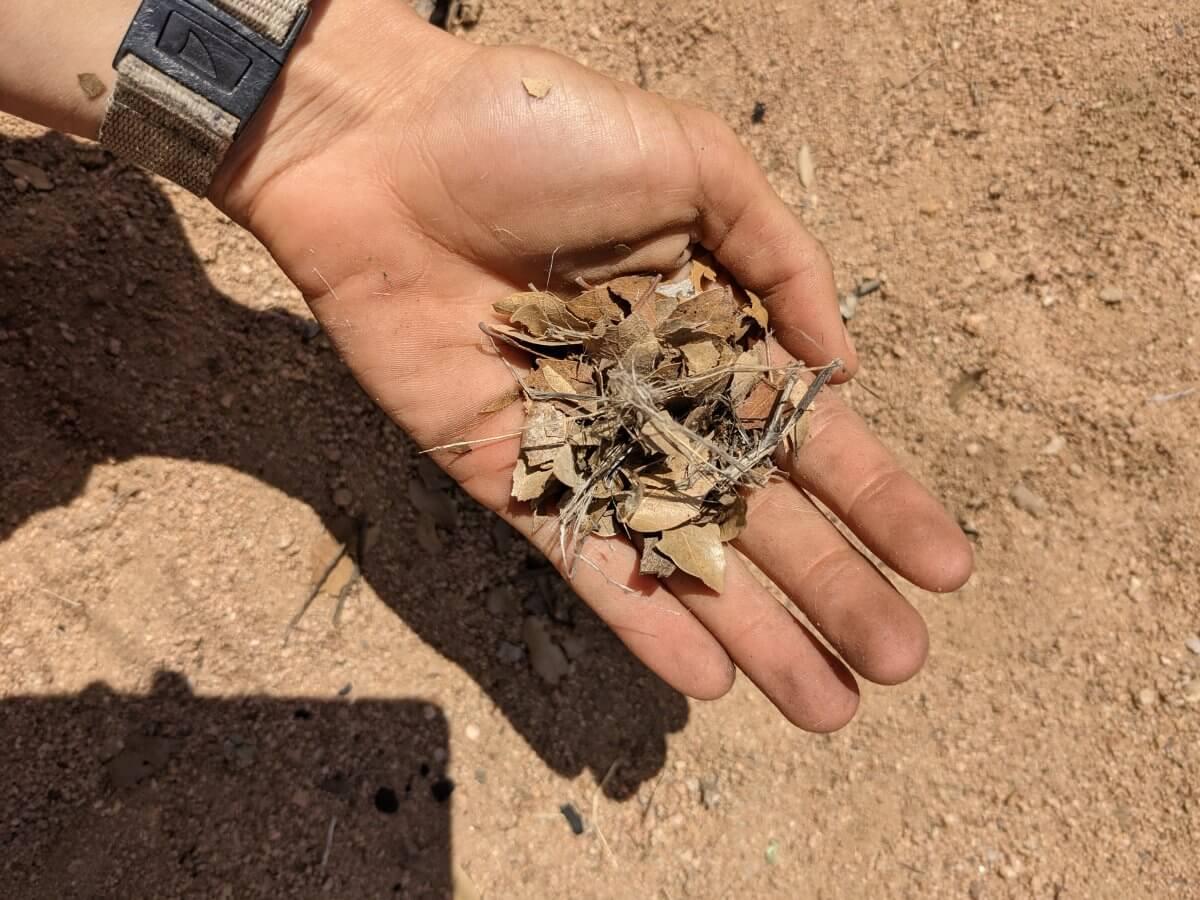 crushed-dried-debris