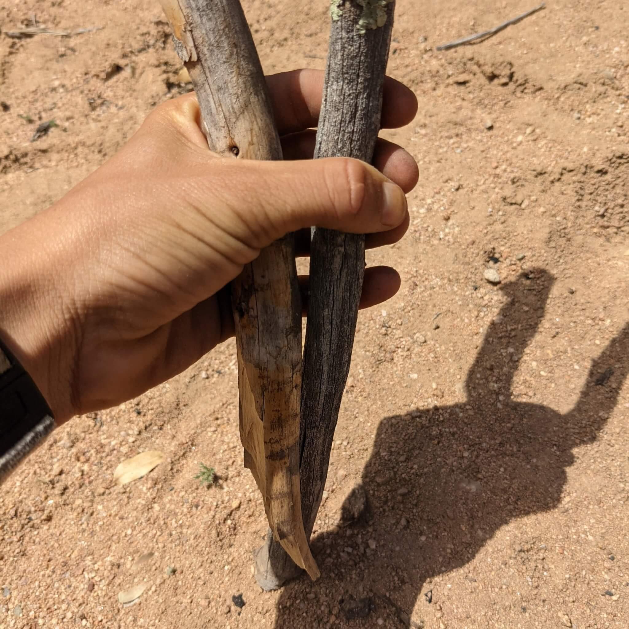 straight-smooth-sticks