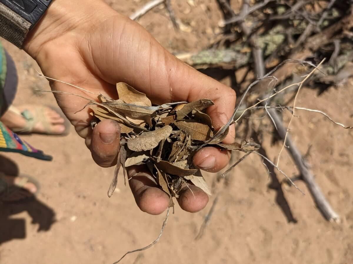 uncrushed-dried-debrus